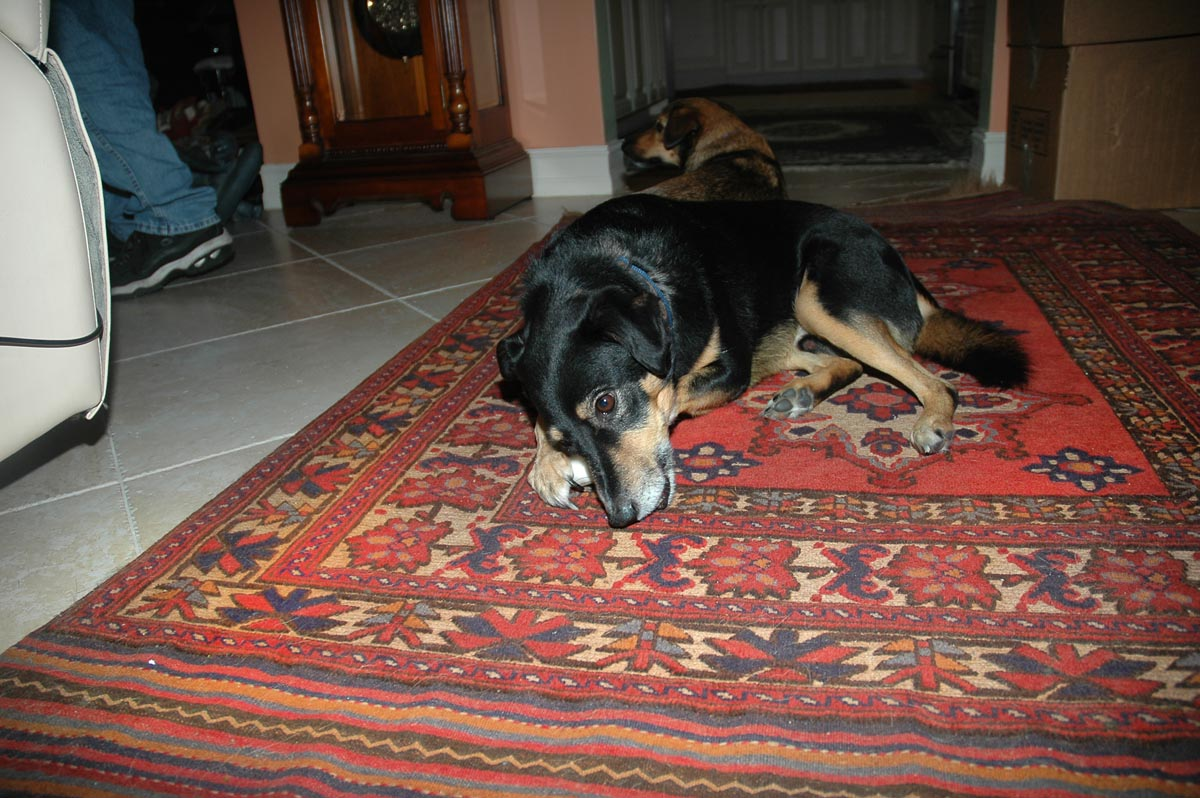 Oriental rug cleaning process that's