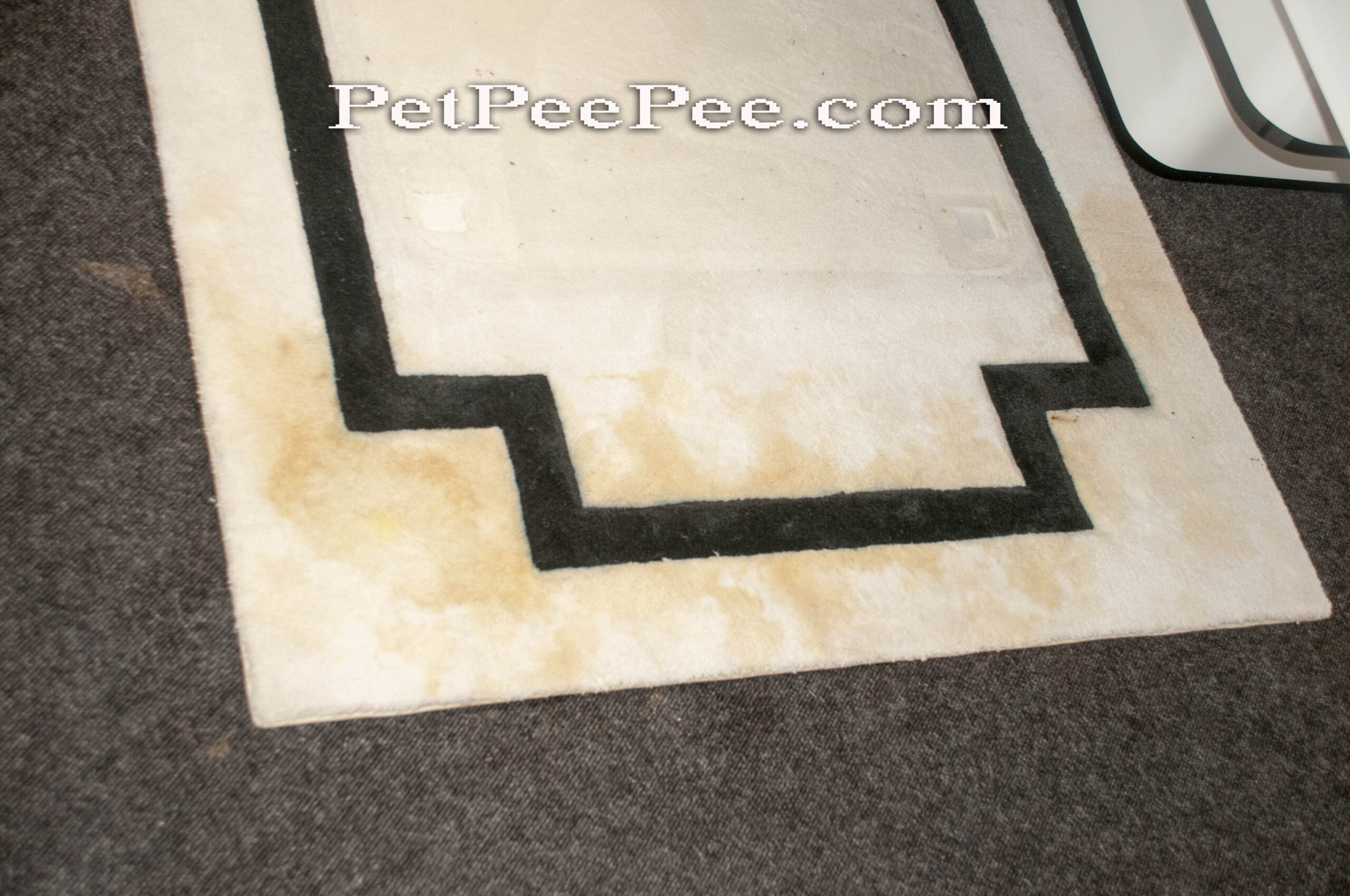 urine odor removal from wool carpet