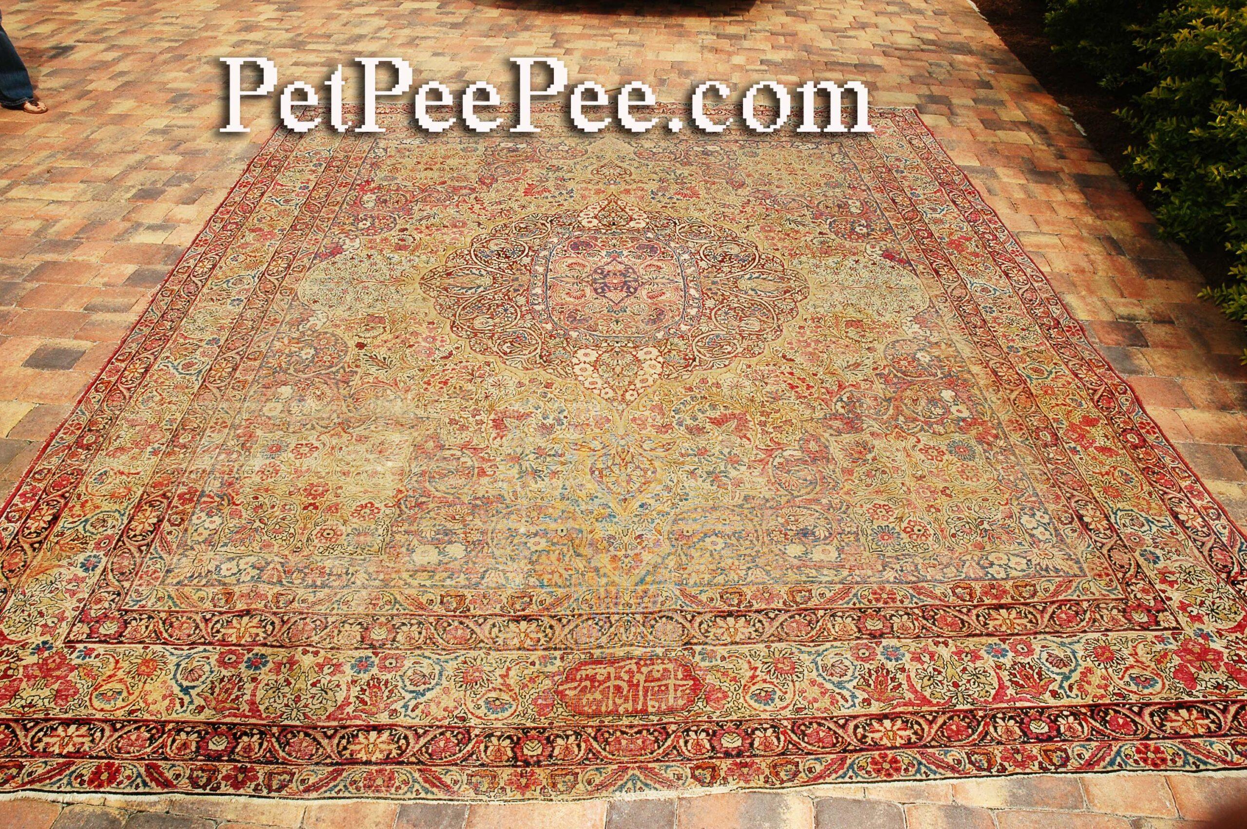 美國佛羅里達州 PetPeePee 公司運送古董波斯絲綢地毯以去除貓尿氣味。