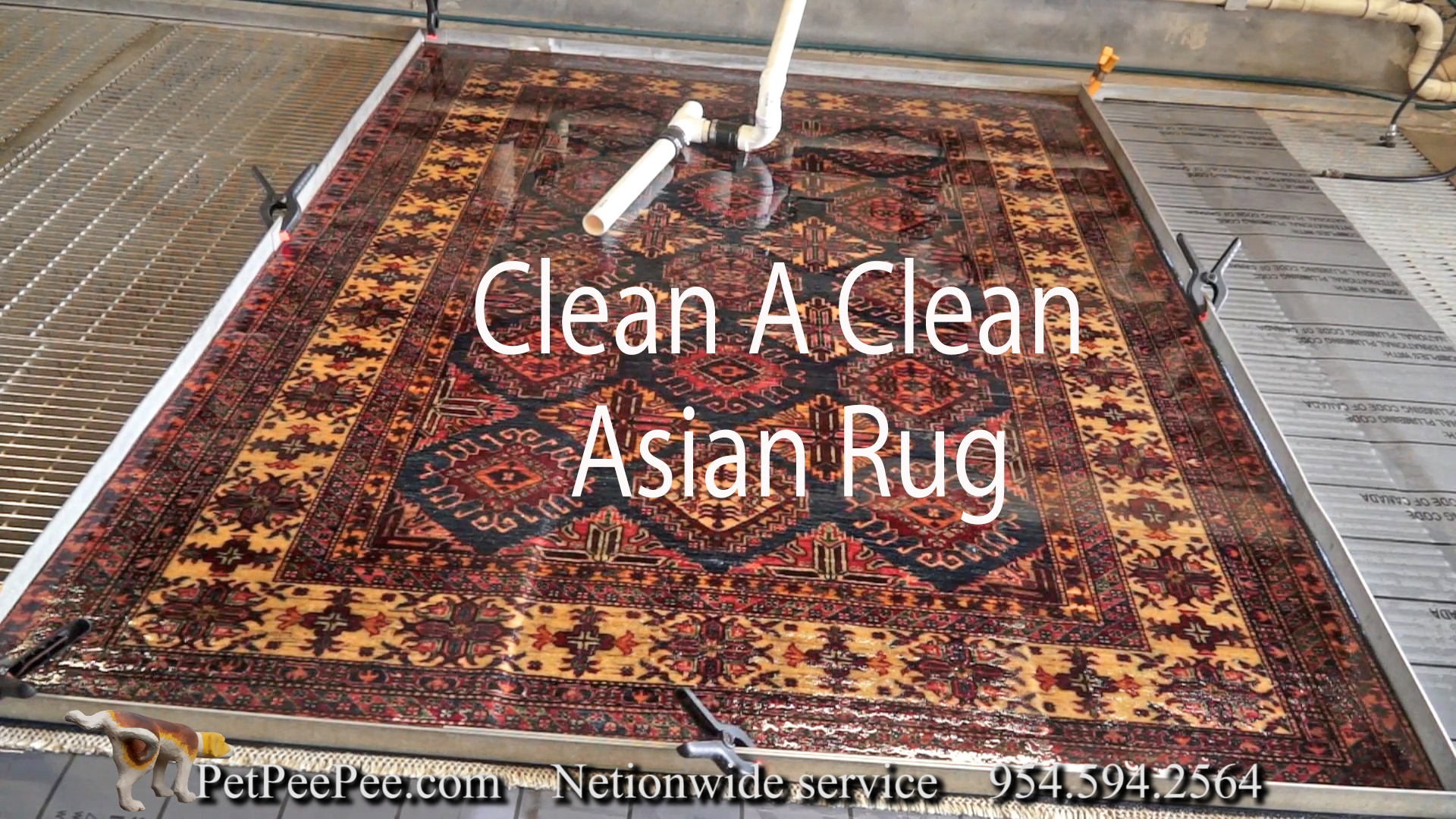 Oriental rug cleaning from urine odor